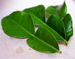Picture of Lime Leaf